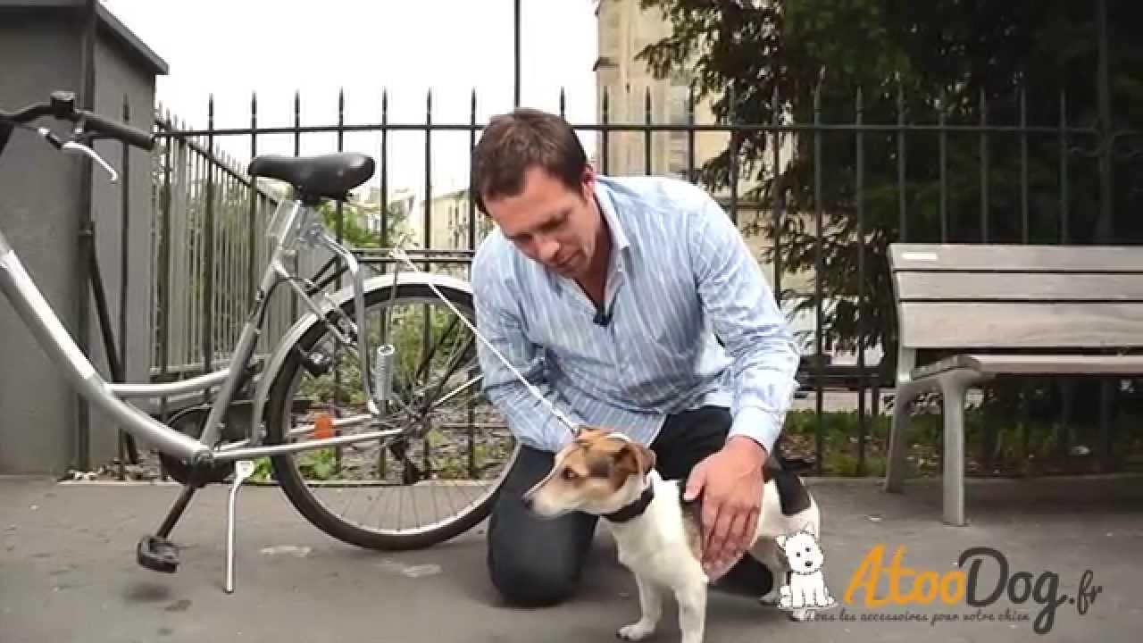 Laisse de vélo pour chien - tenir son chien à vélo - Faire