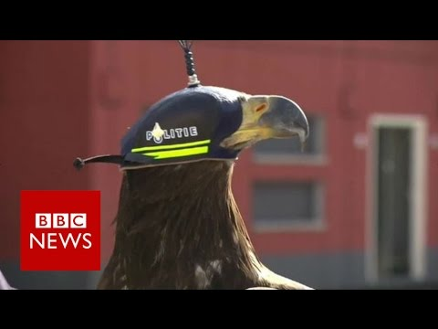 Eagles vs drones - BBC News