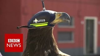 Eagles vs drones - BBC News