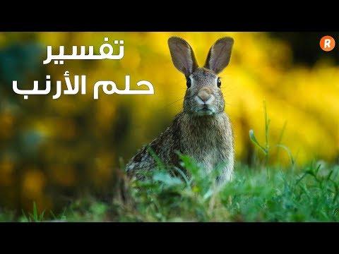 تفسير حلم الأرنب ما معنى رؤية الأرنب في الحلم سلسلة