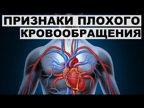 Как улучшить кровообращение организма