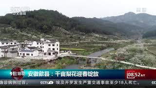 [今日环球]安徽歙县:千亩梨花迎春绽放  CCTV中文国际