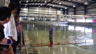 OSU wave lab tsunami test