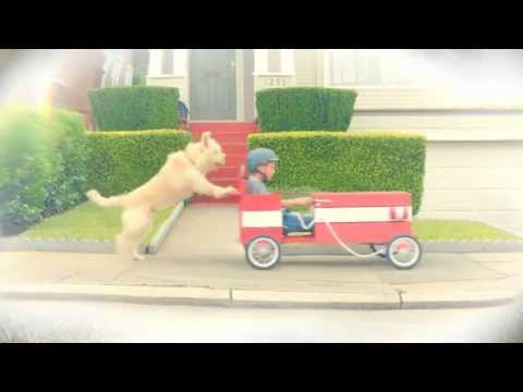 Travelers Insurance Soapbox Car Dog Commercial