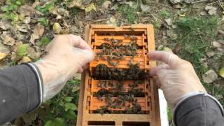 Apidea mating hive with super in Apis Donau mating station