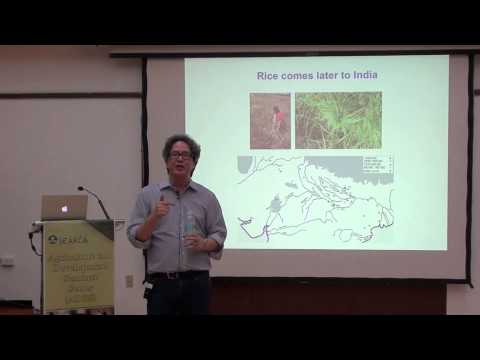 The Evolution of Plant Genomes