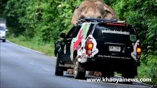 park rangers controlling an elephant on the road