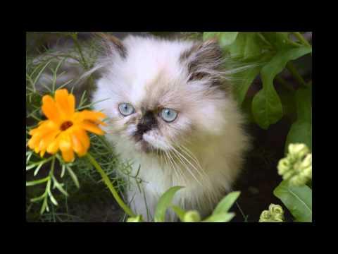 Ирина Муравьёва - Я - кошка, кошка, кошка...