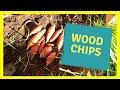 Growing Sweet Potatoes in Wood chips EASY