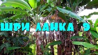 Шри-Ланка 9: Чудо сад и волшебная медицина