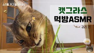 [나무 ASMR] 고양이 캣그라스 먹방 ASMR / 귀…
