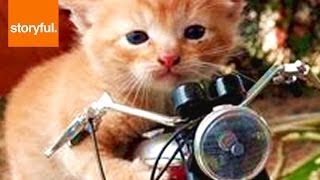 Cat Riding Motorcycle In A Ball thumbnail