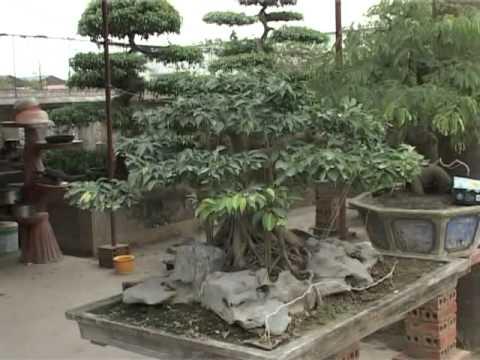 Cây cảnh Thanh Hóa