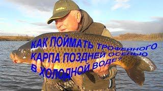 Как поймать трофейного карпа поздней осенью в холодной воде Карпфишинг