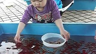 金魚すくい塾 天才?3歳で・・・ thumbnail