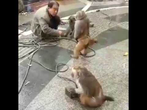 Monkey Show in China -  Funny Acting