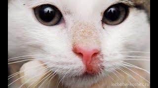 Как выглядит лишай у кошек, признаки и лечение