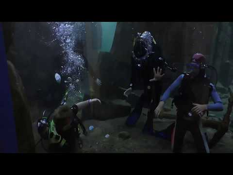 Our Scuba Trips | Aquarium Dive