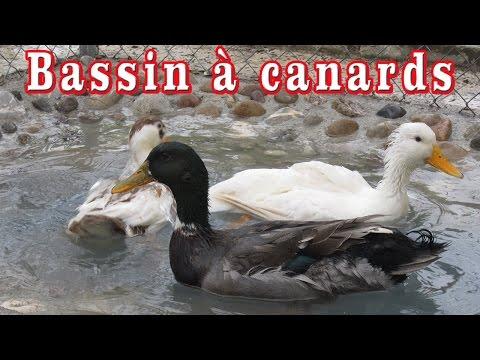 Bassin canard au jardin boudjellil youtube - Bassin canard beton orleans ...
