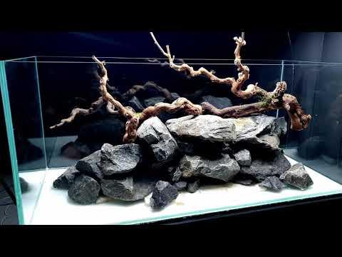aquascape-tutorial:-360°-river-aquarium-/-paludarium-/-aqua-terrarium-||-md-fish-tanks