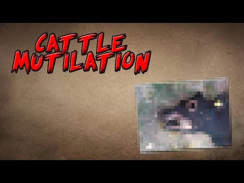 The Mystery of Cattle Mutilation