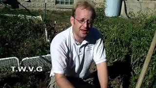 Pickled Swiss Chard Stems, The Potato Harvest The Wisconsin Vegetable Gardener Show 37