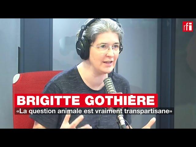 Brigitte Gothière: «La question animale est vraiment transpartisane»