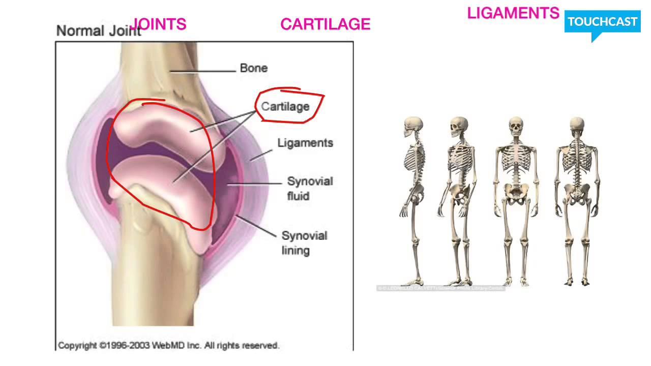 Erfreut Anatomie Integumentary System Galerie - Anatomie Ideen ...