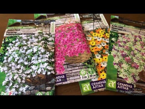 Купила семена ампельных цветов и не только.Жду ваших комментариев!