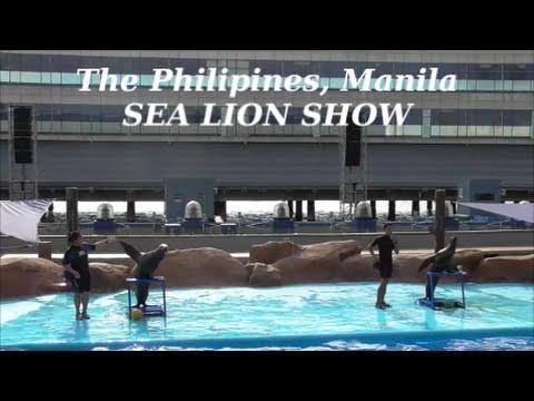 Manila Tourist Sea Lion Show at Manila Ocean Park