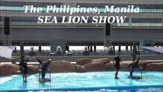 Manila Tourist Sea Lion Show at Manila Ocean Park