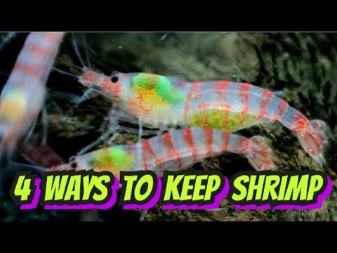 4 Easy Shrimp Set Ups. How To Set Up Aquariums For Breeding Cherry, Neocaridina & Caridina Shrimp