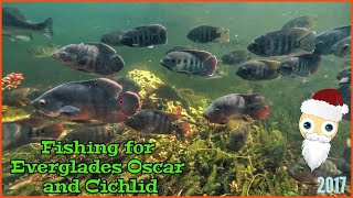 Fishing For Oscar and Cichlid in Natural Aquarium