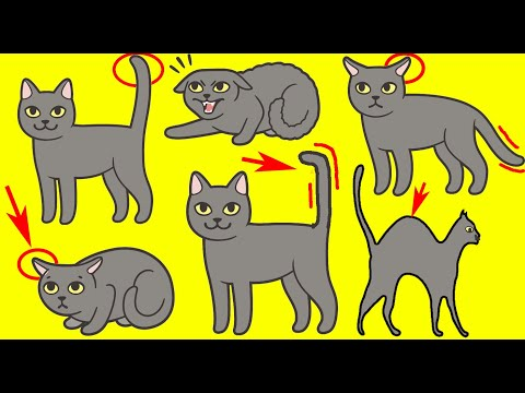Cat Language Explained