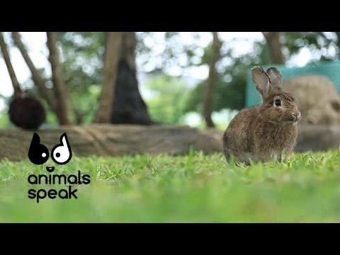Animals Speak [by Mahidol] รู้จักกระต่าย ก่อนควักกระเป๋า (29 มิถุนายน 2557)