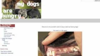 How To Get Started Feeding Your Dog Prey-model Raw