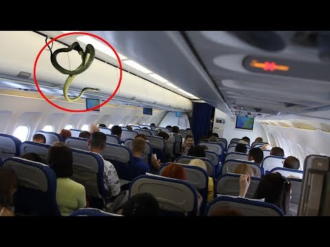 7 Weird Things That Happened On Airplanes