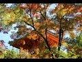 三瀧寺の紅葉 by 心の趣く儘 道楽 on YouTube