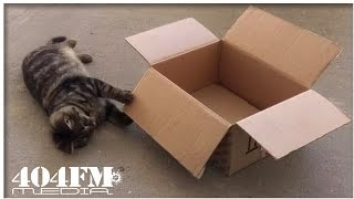 Кот Радист Коты веселятся Смешные коты и кошки