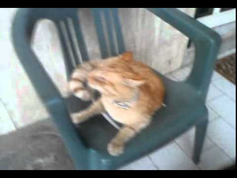 Gatto che starnutisce e fa mettere paura il cane youtube for Gatto che starnutisce