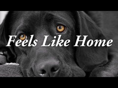 Feels Like Home | Chantal Kreviazuk Karaoke (With Vocals)