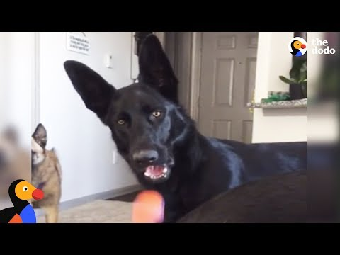 Dog Gets Worried About Crying Kid Sounds | The Dodo