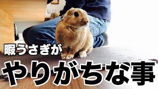 かまって欲しくて悪さをするウサギ  Mischief to rabbit #331 thumbnail