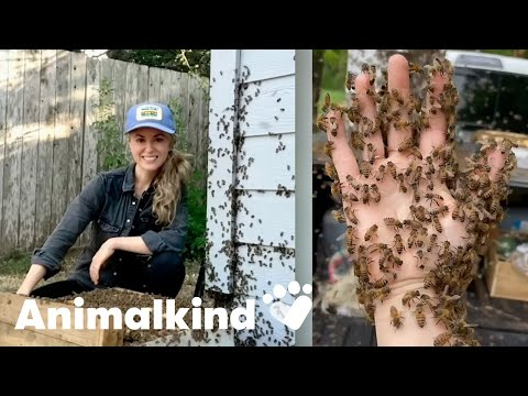 Beekeeper rescues bees with her bare hands   Animalkind