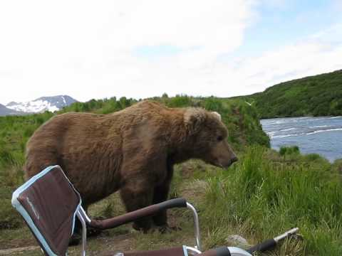 bear sits next to guy