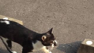 Rosy sunlight stretches onto cats.(27) 指薔薇色の女神指(さ)す thumbnail