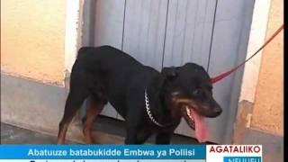 Abatuuze batabukidde embwa ya Poliisi thumbnail