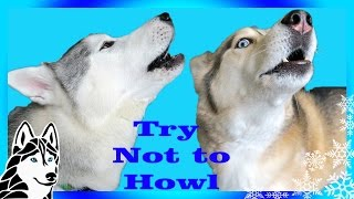 TRY NOT TO HOWL CHALLENGE | Try Not to Laugh | Dogs React to Howling