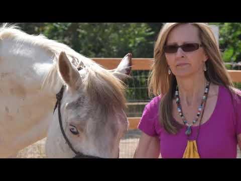 Horse Internship 2017
