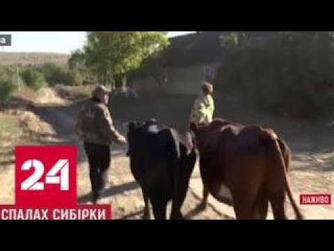 Вспышка сибирской язвы на Украине: кого винит Киев - Россия 24